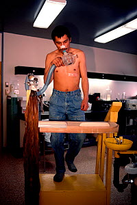 Young Inuit man undergoing fitness testing at the Science Institute's Research Laboratory in Igloolik, Nunavut, Canada, 1990. Editorial use only. - Bryan and Cherry Alexander