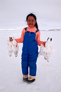 Inuit girl holding Rock ptarmigans (Lagopus mutus) that her father has shot for food. Baffin Island, Nunavut, Canada, 1992.  -  Bryan and Cherry Alexander