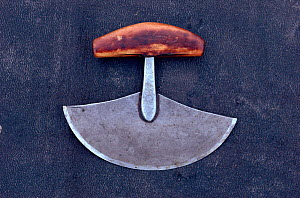 Ulu (traditional Inuit woman's knife), used for scraping skins, sewing & cutting meat. Nunavut, Canada, 1992.  -  Bryan and Cherry Alexander