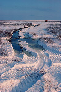 Tyre track damage to the fragile tundra. Canada, 1989.  -  Bryan and Cherry Alexander