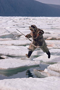 Inuit hunter jumping from one ice floe to another. Ellesmere Island, Nunavut, Canada, 1994.  -  Bryan and Cherry Alexander