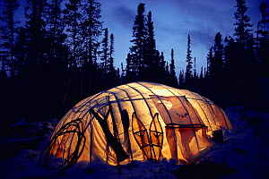 Light from kerosene lamp illuminating Cree winter tent in boreal forest. Quebec, Canada, 1988. - Bryan and Cherry Alexander