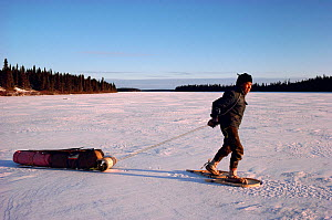 Elderly Cree man in snowshoes hauling birchwood sled. Quebec, Canada, 1988.  -  Bryan and Cherry Alexander