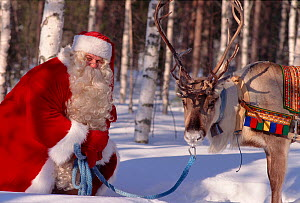 Santa Claus / Father Chrismas with Reindeer (Rangifer tarandus), Rovaniemi, Finland, 1996.  -  Bryan and Cherry Alexander
