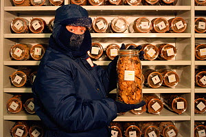 Seed bank officer holding jar of frozen seeds in freezer at Wakehurst Place Seed Bank, West Sussex, England, 2000. - Bryan and Cherry Alexander
