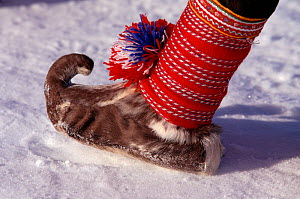 Traditional Sami shoe made from Reindeer (Rangifer tarandus) skin. Norway, 1996.  -  Bryan and Cherry Alexander