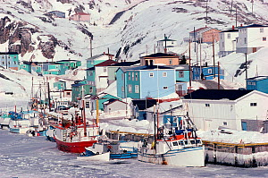 Fishing-boats iced in at Rose Blanche. Newfoundland, Canada, 1992.  -  Bryan and Cherry Alexander