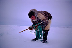 Inuit hunter waiting by seals breathing hole, with harpoon ready. Northwest Greenland, 1980.  -  Bryan and Cherry Alexander