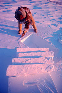 Fur clad Inuk building igloo for hunting shelter. Northwest Greenland, 1980.  -  Bryan and Cherry Alexander