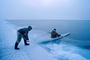 Inuit hunter using kayak to retrieve seal shot at ice edge in winter. Thule, Northwest Greenland, 1980. - Bryan and Cherry Alexander