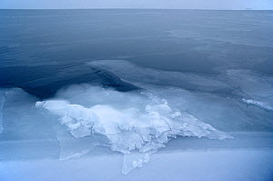 Patterns on newly formed sea ice at floe edge in winter. Northwest Greenland, 1980. - Bryan and Cherry Alexander
