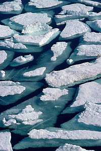 Ice floes as sea ice breaks up in summer off coast of Northwest Greenland, 1980.  -  Bryan and Cherry Alexander