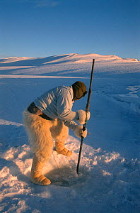 Inuit hunter wearing polar bearskin trousers, making hole in sea ice to set net for catching seals. Northwest Greenland, 1996. - Bryan and Cherry Alexander