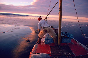 Inuit hunter about to harpoon Bearded seal (Erignathus barbatus) from his boat. Northwest Greenland.  -  Bryan and Cherry Alexander