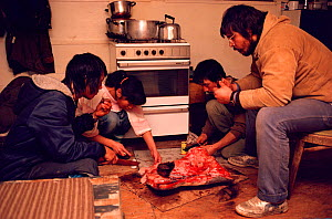 Inuit people sharing meal of muktuk (whale skin) and raw meat. Moriussaq, Northwest Greenland, 1987. - Bryan and Cherry Alexander