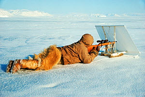 Inuit hunter using white screen hide for camouflage while seal hunting. Northwest Greenland, 1977.  -  Bryan and Cherry Alexander