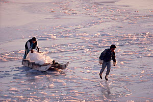 Inuit youths hauling ice from icebergs to use for drinking water in the village of Savissivik, Northwest Greenland, 1991.  -  Bryan and Cherry Alexander