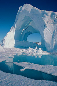 Iceberg surrounded by melting sea ice in summer, Northwest Greenland, 1997. - Bryan and Cherry Alexander
