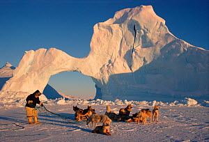 Inuit hunter untangling team of Huskies (Canis familiaris) by ice arch. Melville Bay, Northwest Greenland, 1998.  -  Bryan and Cherry Alexander