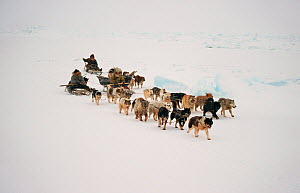 Chukchi hunters travelling with Huskies (Canis familiaris) near Cape Dezhnev. Chukotskiy Peninsula, Chukotka, Siberia, Russia.  -  Bryan and Cherry Alexander