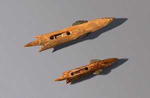Harpoon heads carved from Walrus ivory (circa 1000 BC - 1000 AD) Bering Strait, Chukotka, Siberia, Russia.  -  Bryan and Cherry Alexander