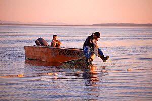 Nivkhi fisherman retrieving Chum salmon (Oncorhynchus keta) from net at sunset. Niva Bay, Sakhalin Island, Russian Far East, 2006. - Bryan and Cherry Alexander