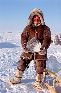 Dolgan reindeer / caribou herder carrying block of ice to be used for drinking water. Taymyr, Northern Siberia, Russia, 2004.  -  Bryan and Cherry Alexander