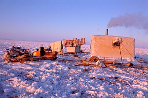 Dolgan reindeer / caribou herder's balok (wooden hut built on sled runners) with chimney smoking. Taymyr, Northern Siberia, Russia, 2004. - Bryan and Cherry Alexander