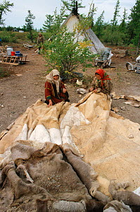 Nenets women sewing Reindeer / Caribou skin tent at summer camp in the Yamal. Western Siberia, Russia, 2000. - Bryan and Cherry Alexander