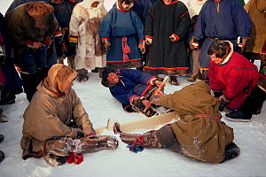 Nenets Reindeer / Caribou herders competing in strength contest during local festival. Yamal, Siberia, Russia, 1993.  -  Bryan and Cherry Alexander