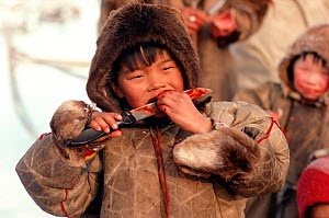 Nenets boy eating raw Reindeer / Caribou meat with a sharp knife. Yamal, Siberia, Russia, 1993.  -  Bryan and Cherry Alexander