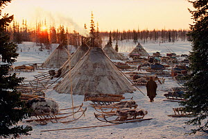 Sun rises behind Reindeer / Caribou skin tents at a Nenets herders' winter camp. Yamal, Siberia, Russia, 1993.- 40 BELOW BOOK - Bryan and Cherry Alexander