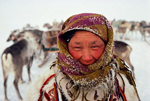 Nenets Reindeer / Caribou herder's wife frosted up after a cold day of travelling. Yamal, Siberia, Russia, 1993. - Bryan and Cherry Alexander