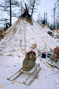 Nenets baby in a cradle on wooden sled at Reindeer / Caribou herders' winter camp. Yamal, Western Siberia, Russia, 1996.  -  Bryan and Cherry Alexander