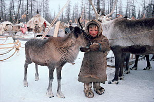 Nenets boy feeding bread to Reindeer / Caribou yearling (Rangifer tarandus) at winter camp. Yamal, Siberia, Russia, 1996.  -  Bryan and Cherry Alexander