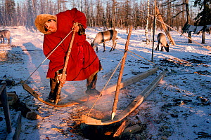Nenets Reindeer / Caribou herder bending larch planks into sled runners over fire. Yamal, Siberia, Russia, 1996.  -  Bryan and Cherry Alexander