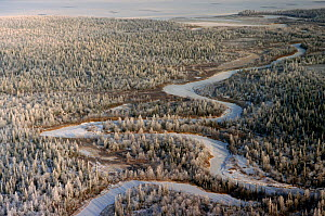 Aerial view of boreal forest and newly frozen river in autumn. Yamal, Western Siberia, Russia, 2001 - Bryan and Cherry Alexander