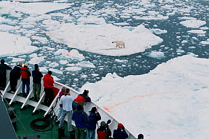 "Tourists on icebreaker ""Professor Multanovskiy"" watching Polar bear (Ursus maritimus) in pack ice. Svalbard, Norway, 2004. - Bryan and Cherry Alexander"