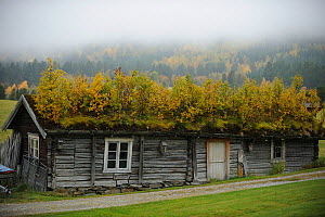 Wood building with green roof, Forollhogna National Park, Norway, September 2008  -  Wild Wonders of Europe / Munier