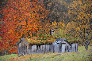 Wood Hut with grass roof, Forollhogna National Park, Norway, September 2008  -  Wild Wonders of Europe / Munier