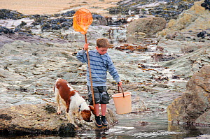 Domestic dog, Springer spaniel (Canis familiaris) and child with fishing net and bucket peer into a rock pool. Cornwall, UK. Model released, April 2009  -  Nick Upton