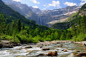 River Gave, Arribama forest and the Cirque de Gavarnie, Pyrenees National Park, Haute Pyrenees, France. July 2009  -  Nick Upton