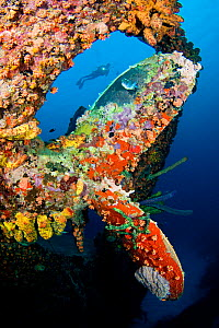 Diver swimming behind the propeller of the wreck of the Hilma Hooker, a 236 foot long cargo vessel that sunk in 1984 off the island of Bonaire in the Caribbean.  -  David Fleetham