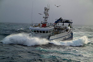 "Gull flying over fishing vessel ""Harvester"" in heavy seas, North Sea, February 2010. Property released.  -  Philip Stephen"