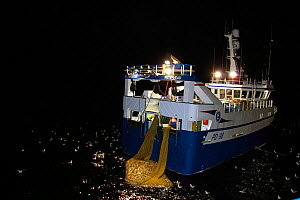 "Fishing vessel ""Harvester"" taking a good haul of Saithe (Pollachius virens) aboard, at night on the North Sea, 60 miles North East of the Shetlands. February 2010, Property released.  -  Philip Stephen"