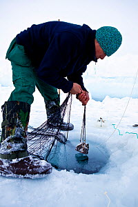 Local hunter setting up nets to catch seals Ittoqqortoormiit, Scoresbysund, North East Greenland. March 2009.  -  Uri Golman