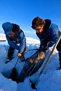 Local hunters with seal caught in net, Ittoqqortoormiit, Scoresbysund, North East Greenland. March 2009.  -  Uri Golman