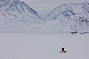 Local man driving his dogsled, Scoresbysund, North East Greenland. March 2009.  -  Uri Golman