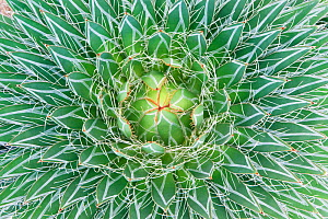Agave close up abstract (Agave sp) Botanical Garden, San Miguel de Allende,  Mexico - Rob Tilley