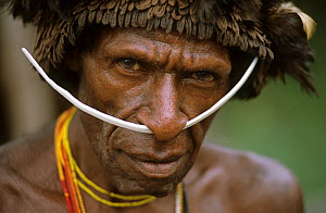 Head portrait of Dani man, with head-dress and nose adornment made of bone, Baliem valley, West Papua, former Irian-Jaya, Indonesia, August 2002 - Eric Baccega